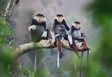 Chỉ thị số 01/CT-UBND Về việc tăng cường công tác quản lý, bảo vệ các loài chim trời